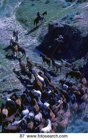 Picture of Cowboys herding horses through rocky terrain 87.