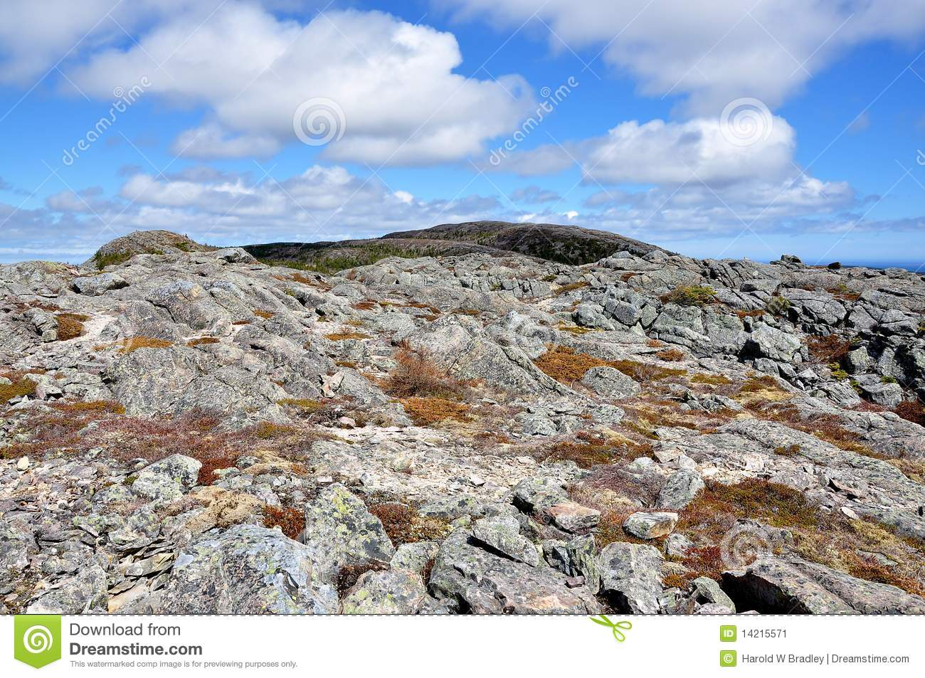 Rugged Terrain In Newfoundland Stock Image.