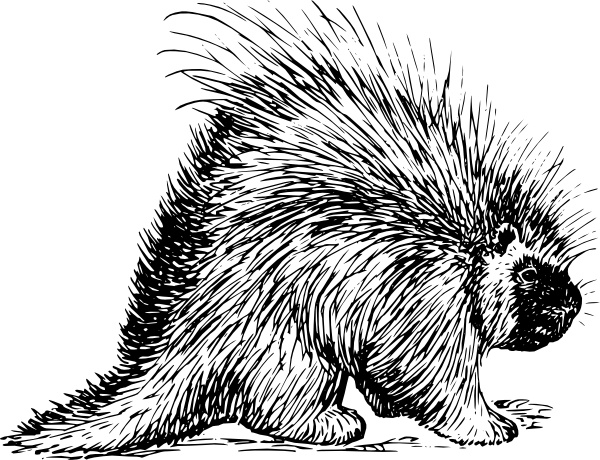 Rodent free vector download (41 Free vector) for commercial use.