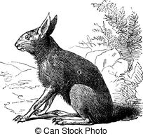 Rodentia Clip Art and Stock Illustrations. 43 Rodentia EPS.