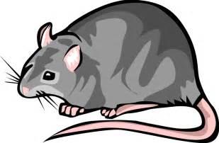 Similiar Rodent Rat Clip Art Keywords.