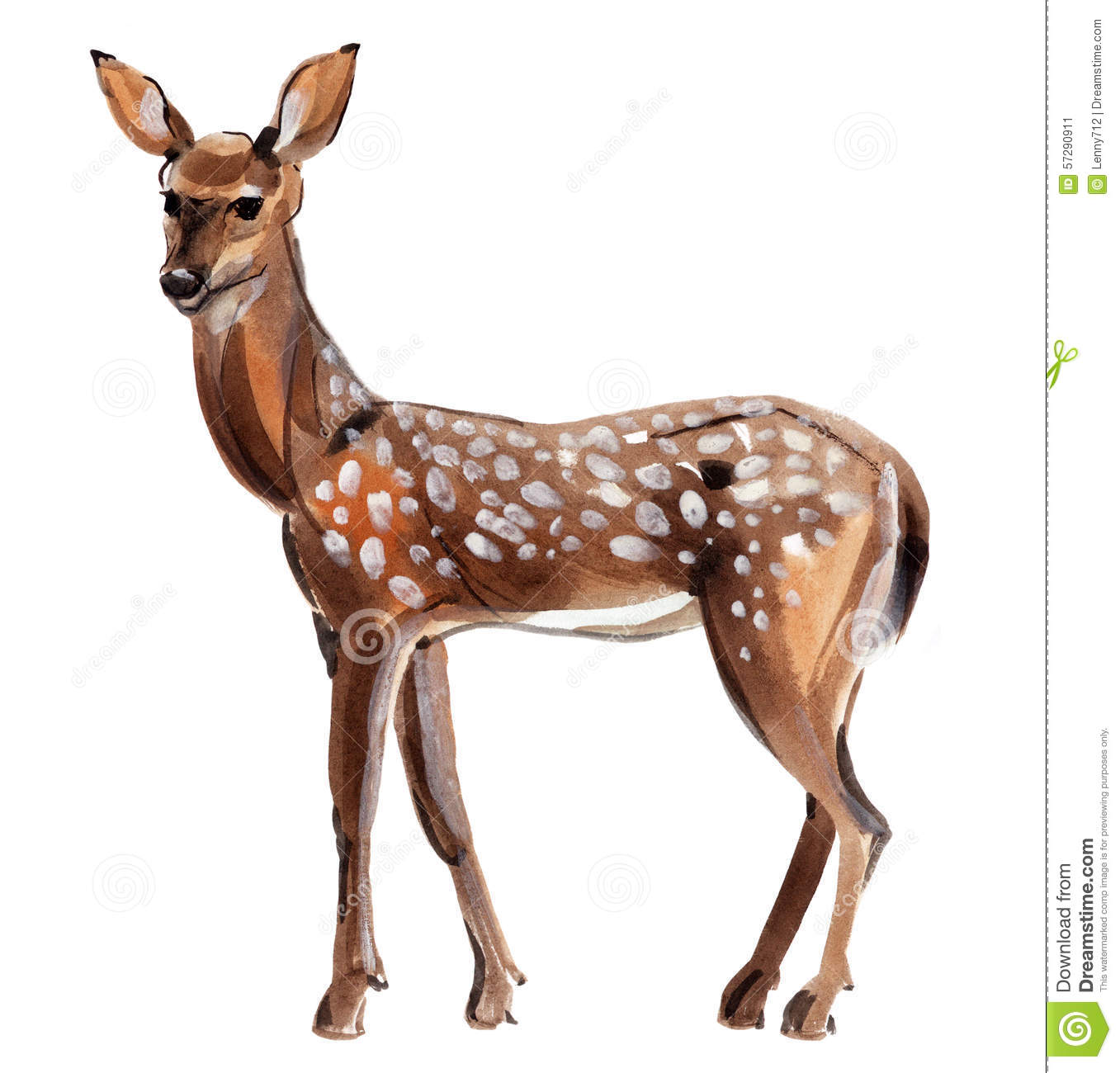 Watercolor Illustration Of Roe Deer In White Background. Stock.