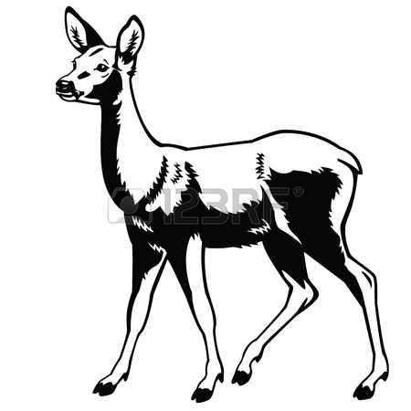 624 Roe Deer Stock Vector Illustration And Royalty Free Roe Deer.