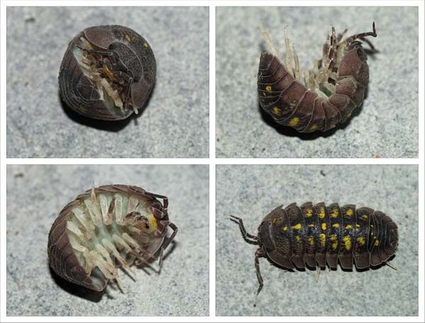 1000+ ideas about Woodlice on Pinterest.