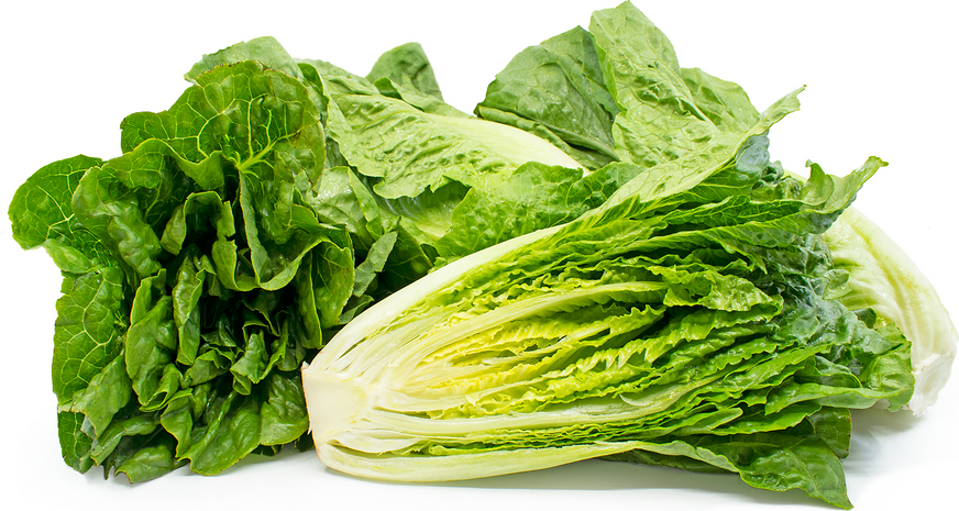Romaine Lettuce Information, Recipes and Facts.