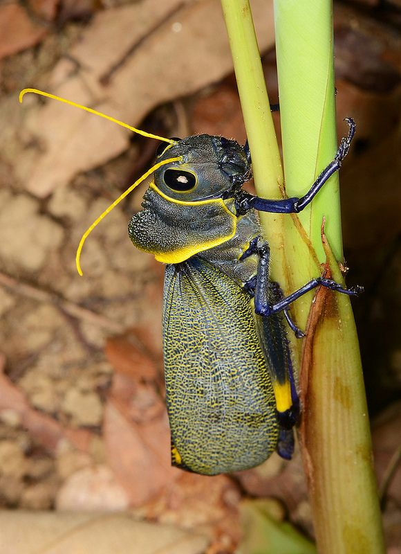 1000+ ideas about Grasshoppers on Pinterest.