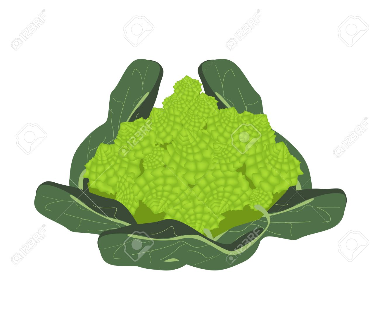 Vegetable, Vector Illustration Of Delicious Fresh Green Romanesco.