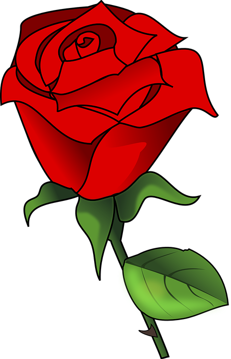 Free vector graphic: Rose, Love, Romance, Romantic.