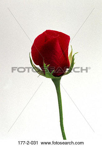 Stock Photography of Valentines, Hearts, day, Flower, Romantic.