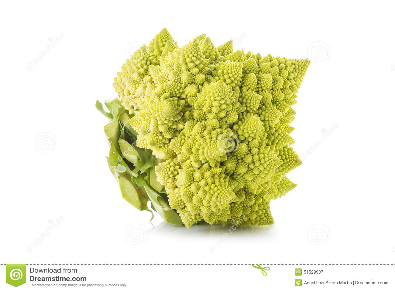 Romanesco Broccoli Vegetable Isolated On White Background Stock.