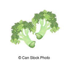 Romanesco Clipart and Stock Illustrations. 13 Romanesco vector EPS.