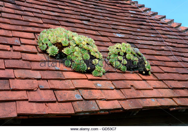 Houseleek Roof Stock Photos & Houseleek Roof Stock Images.