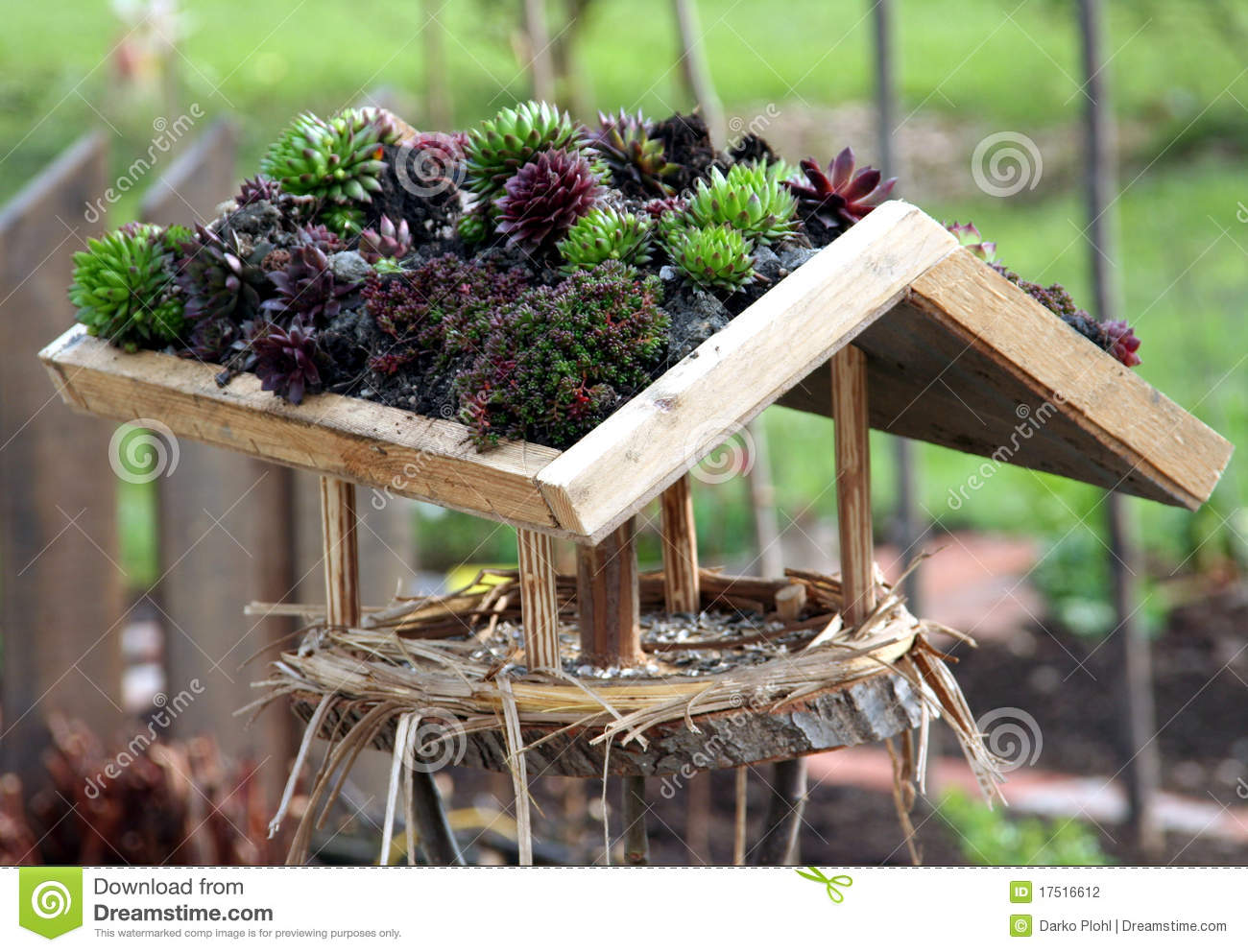 Houseleek On The Bird House Roof Stock Photography.