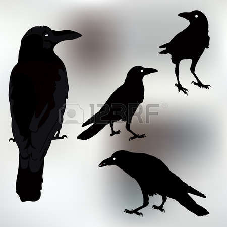 348 Rook Bird Stock Vector Illustration And Royalty Free Rook Bird.