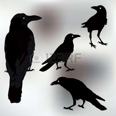 348 Rook Bird Stock Vector Illustration And Royalty Free Rook Bird.