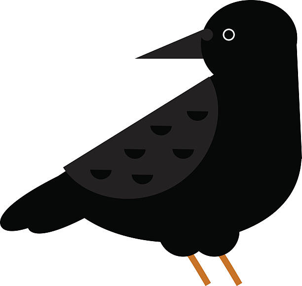 Rook Bird Clip Art, Vector Images & Illustrations.