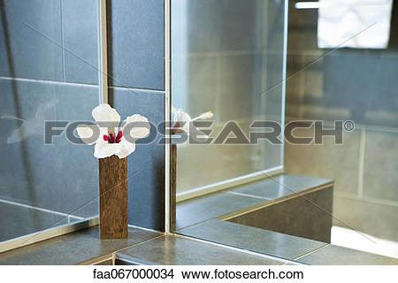 Stock Photo of Hibiscus flower in vase in shower room faa067000034.