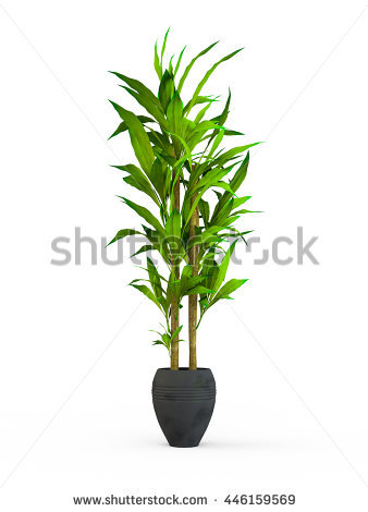 Plants Stock Images, Royalty.
