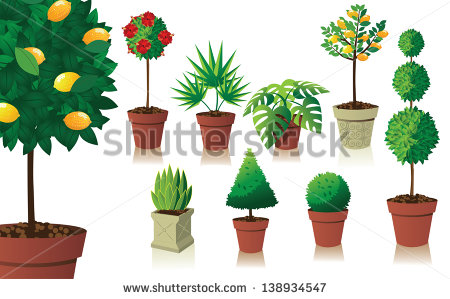 Plant Pot Stock Photos, Royalty.