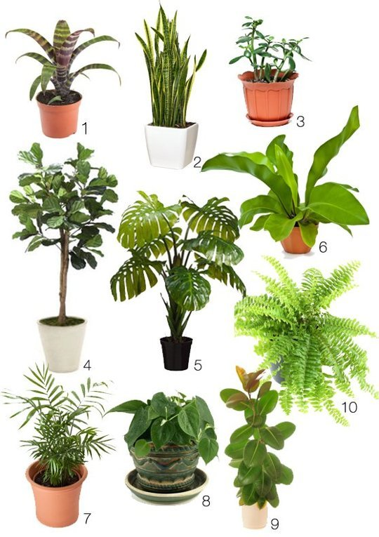 1000+ images about indoor plants on Pinterest.