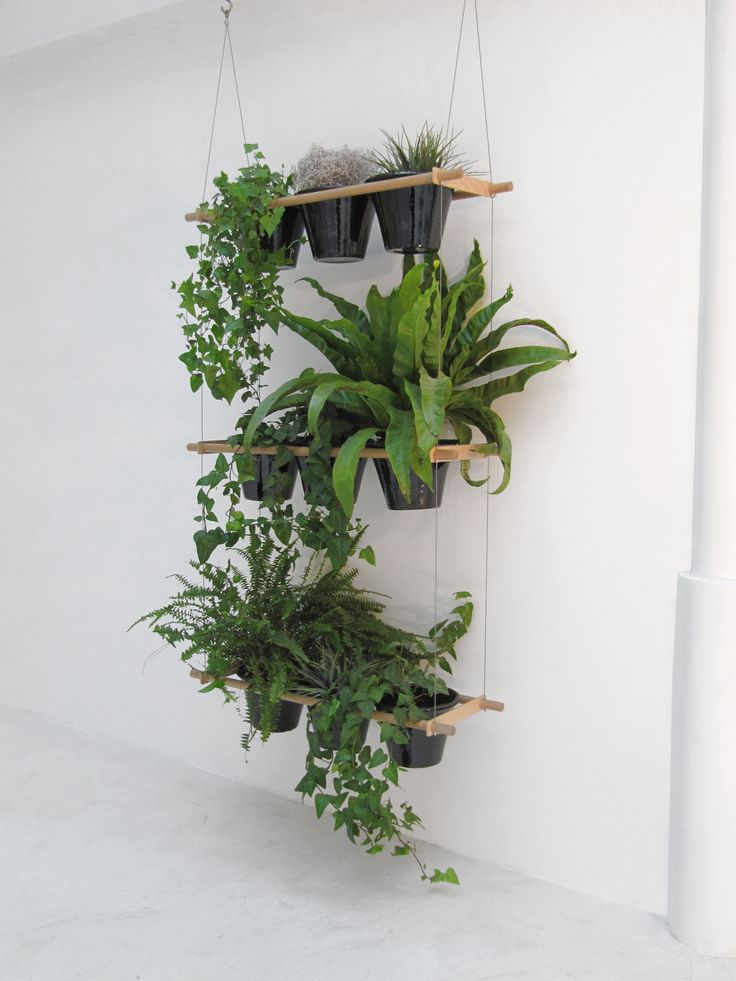 1000+ ideas about Indoor Plant Decor on Pinterest.