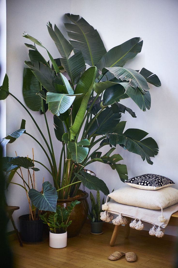 1000+ ideas about House Plants on Pinterest.