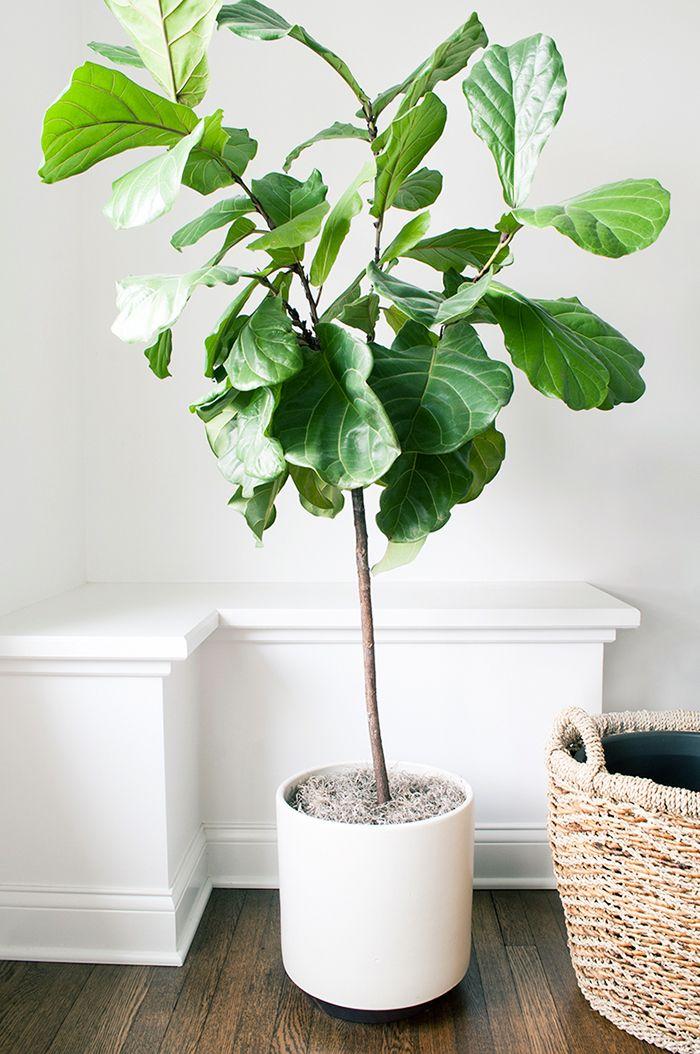 78+ ideas about Interior Plants on Pinterest.
