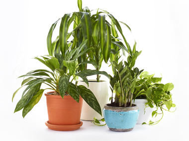 12 Hacks and Tips for Healthy Houseplants.
