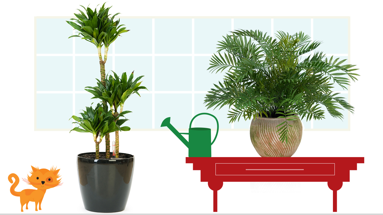 Room plants clipart clipground for Top 10 living room plants