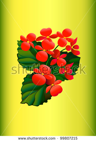 Begonia Flowers Stock Images, Royalty.