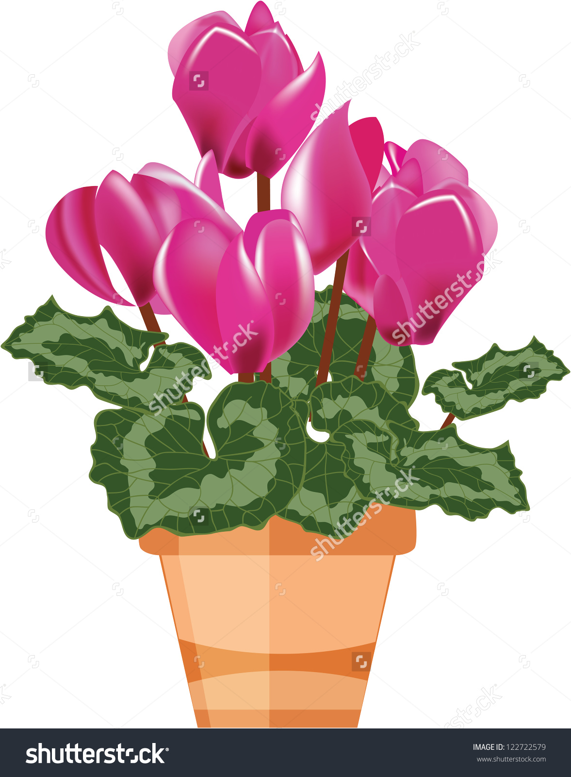 Pink Cyclamen Flower Pot Isolated On Stock Vector 122722579.