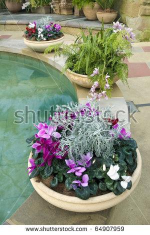 Fountain Flower Stock Photos, Royalty.