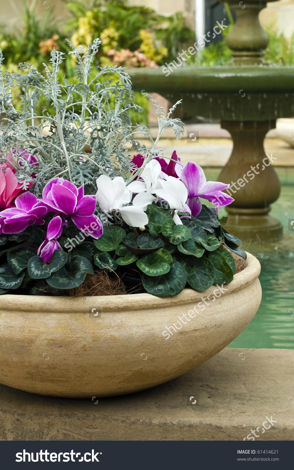 Cyclamen Pot Fountain Garden Room Stock Photo 61414621.