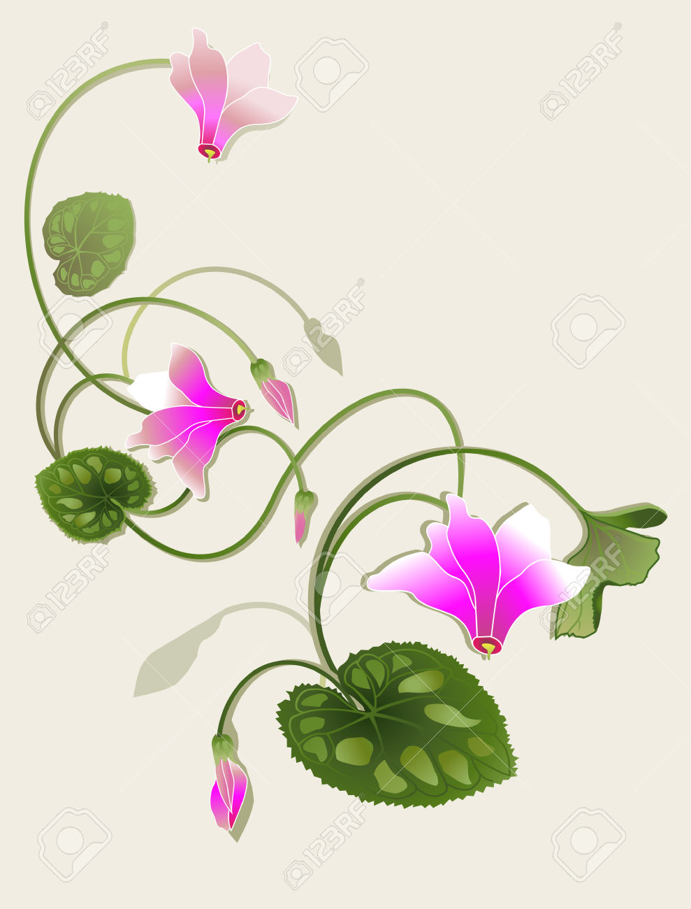Cyclamen Beautiful Design Royalty Free Cliparts, Vectors, And.
