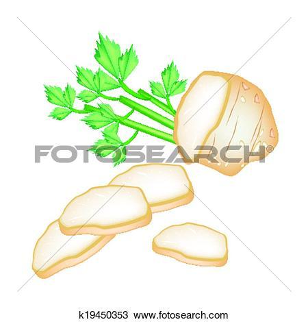 Clipart of Fresh Slice Celery Root on White Background k19450353.