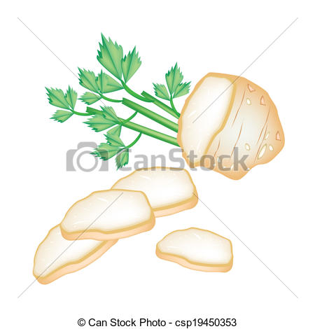 Clipart Vector of Fresh Slice Celery Root on White Background.