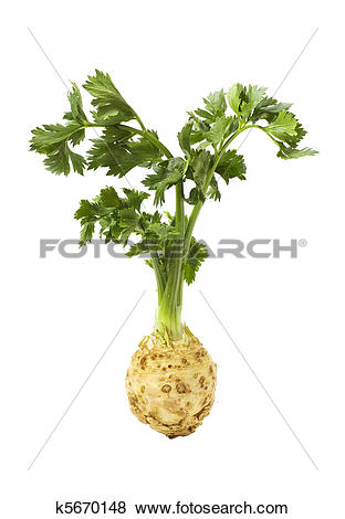 Pictures of Root of celery with leaves isolated k5670148.