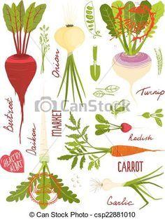 Root crops clipart 8 » Clipart Portal.