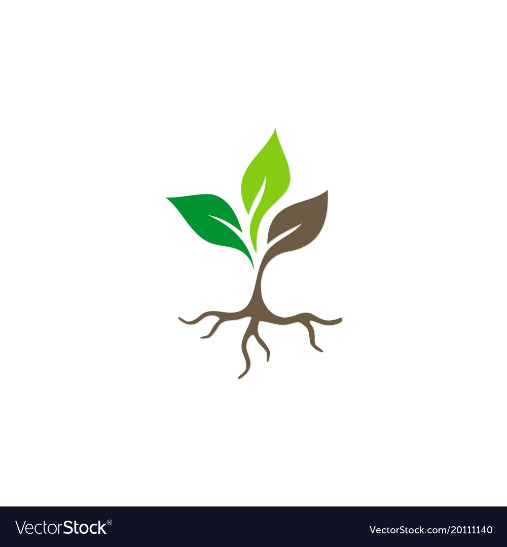 Seed plant root logo.