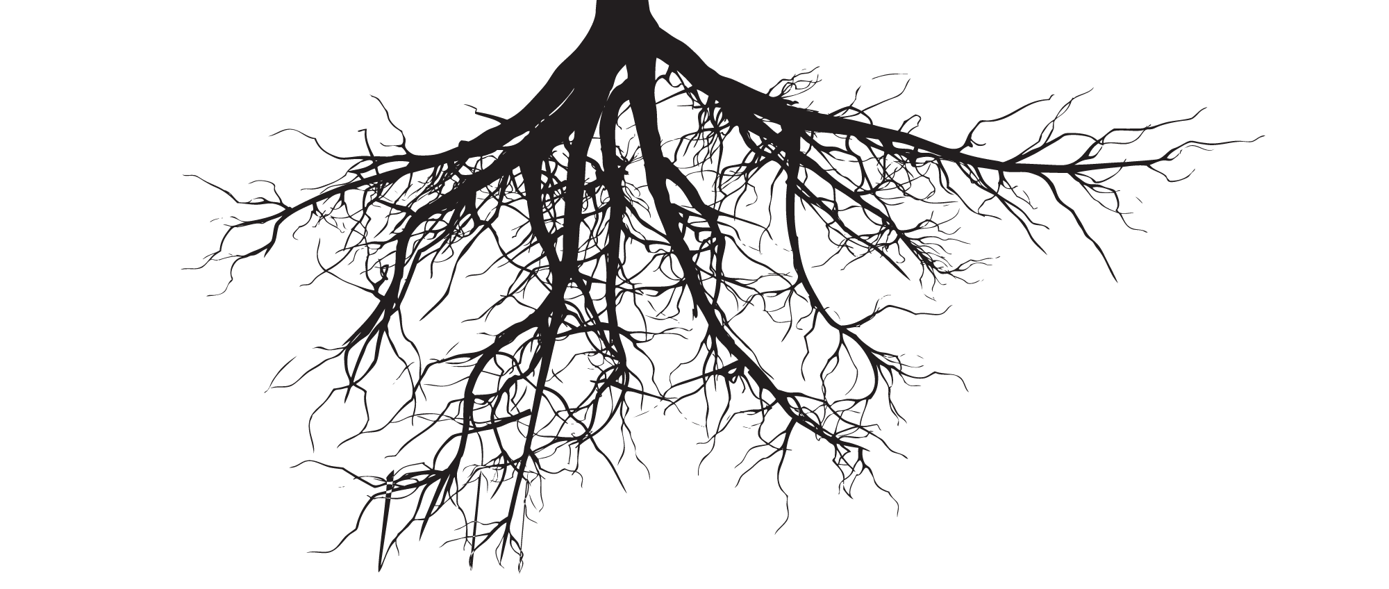 Roots Png (+).