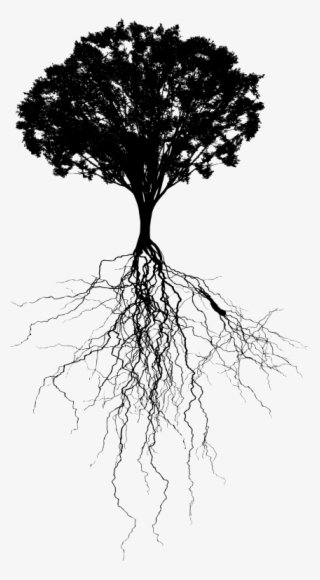 Tree Root Png & Free Tree Root.png Transparent Images #29917.