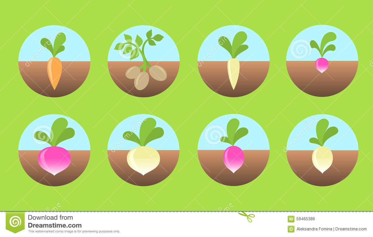 Root Vegetables Icons. Stock Vector.