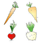 Root vegetable Illustrations and Clip Art. 887 root vegetable.