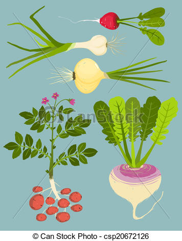 Root vegetables Illustrations and Clipart. 4,478 Root vegetables.