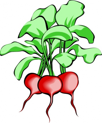 Root Vegetable Clip Art, Vector Root Vegetable.