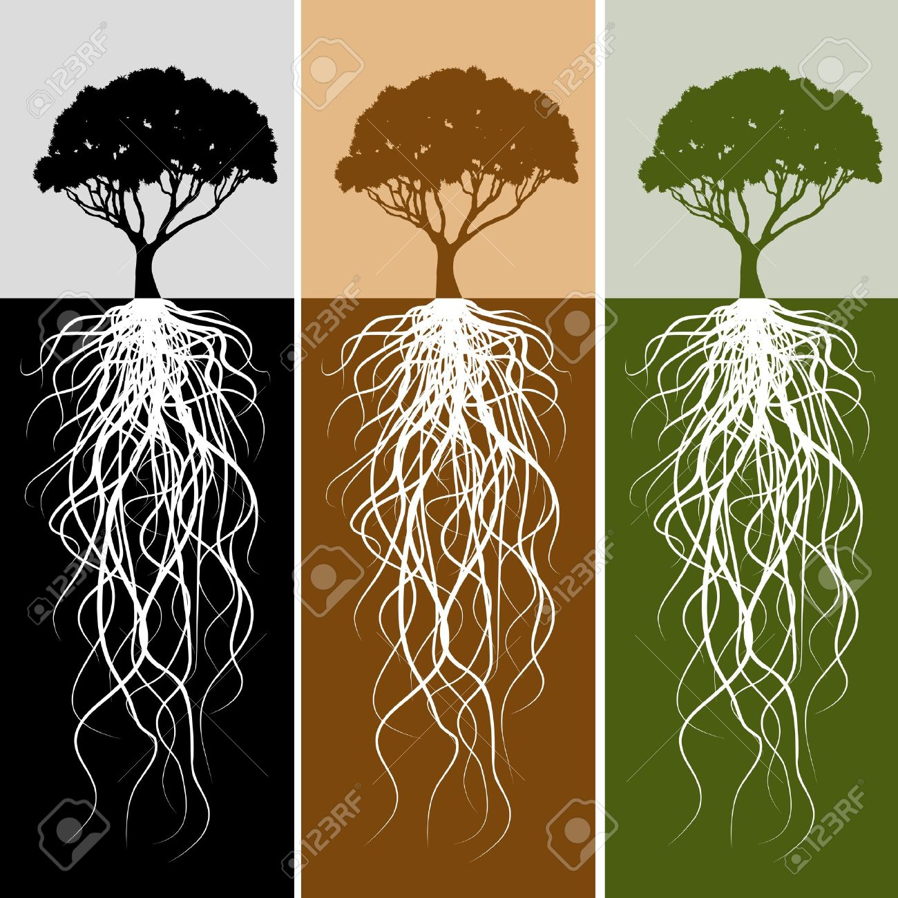 Tree Root Stock Photos, Pictures, Royalty Free Tree Root Images.