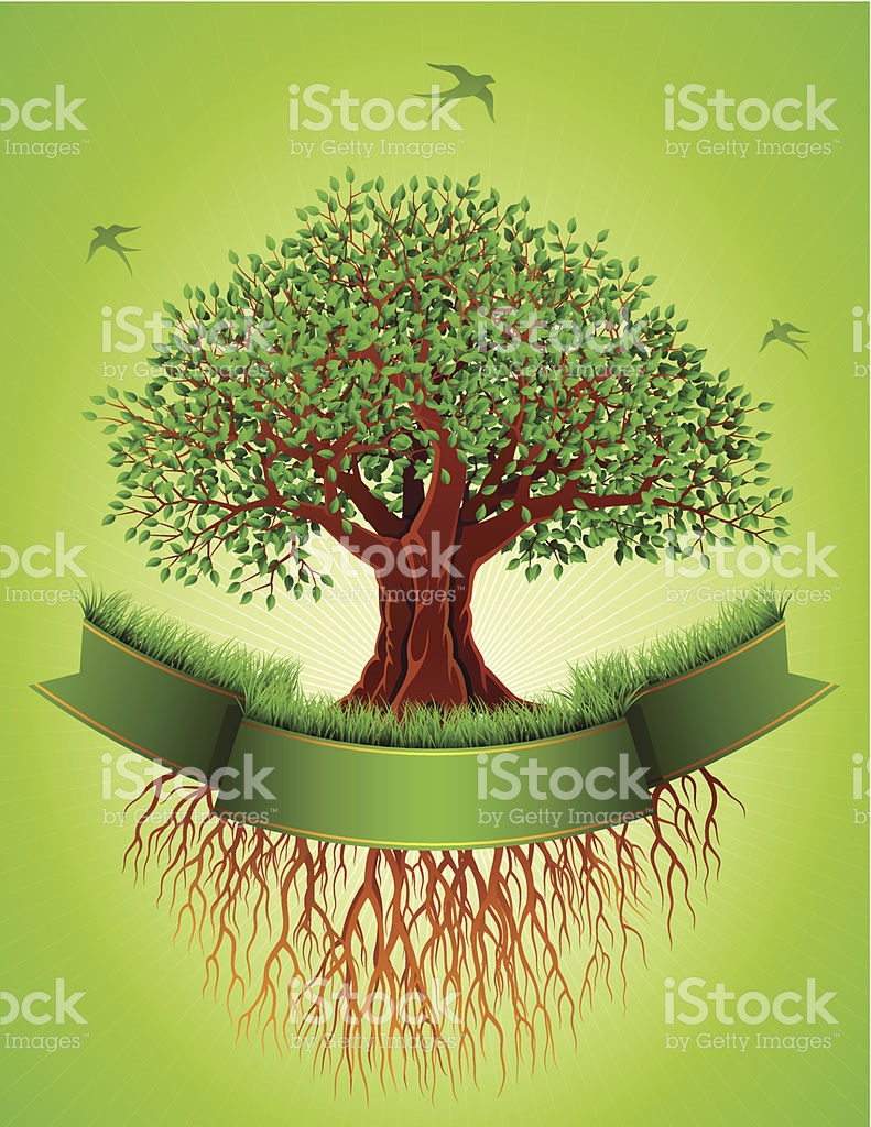 Old Tree With Roots And Banner stock vector art 455588511.