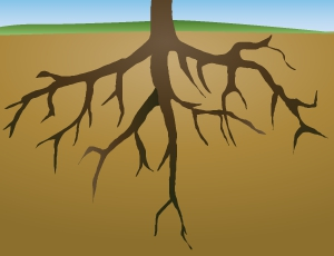 Plant Roots Clipart#1966395.