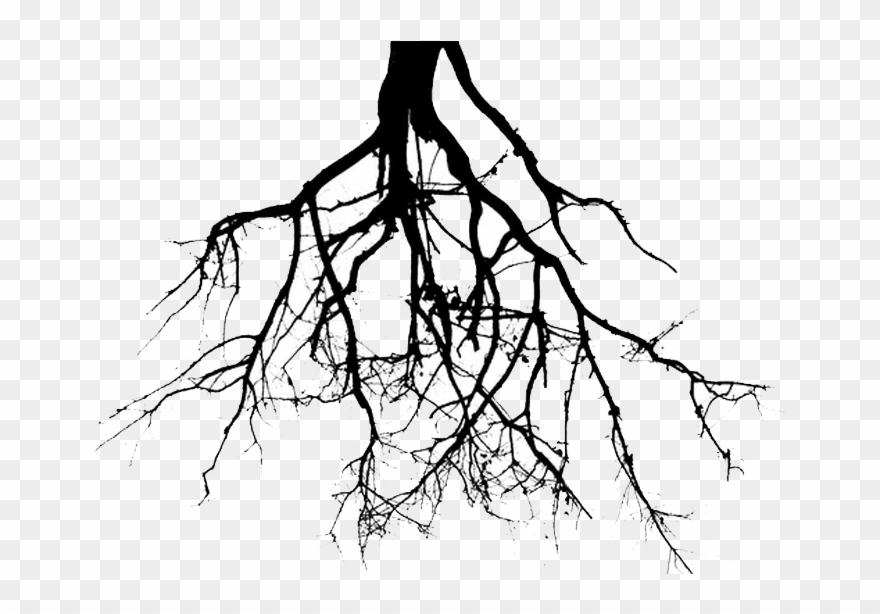 Roots Clipart Tree Png.