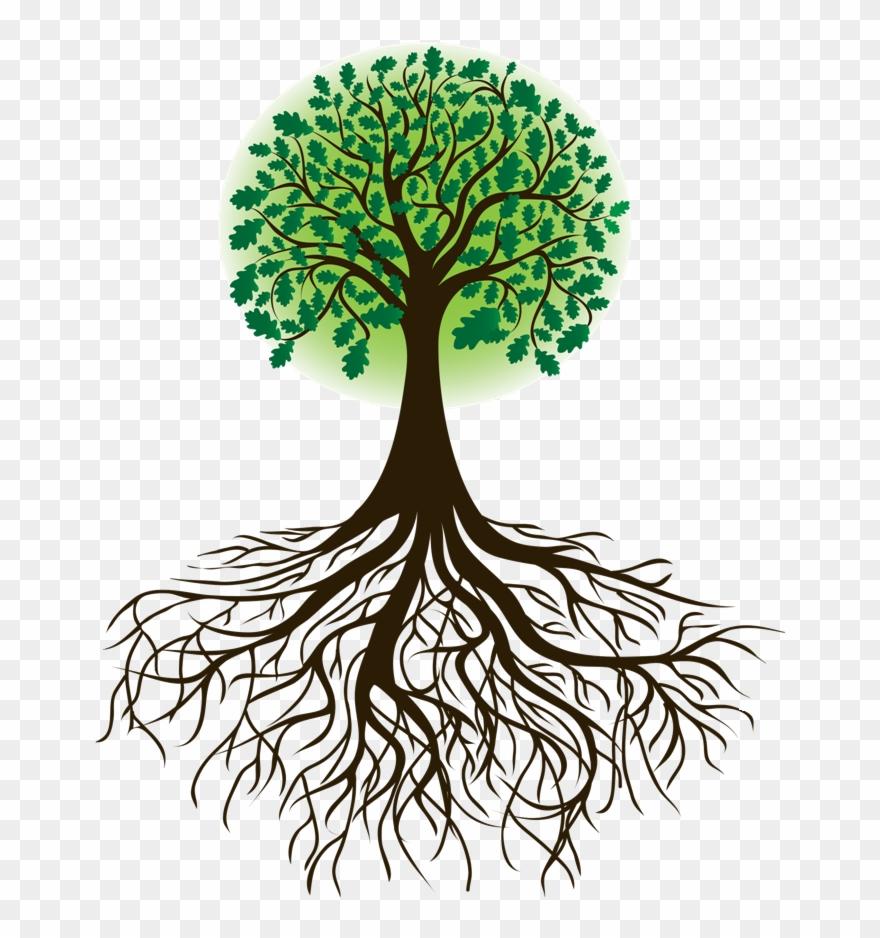 Roots Clipart Cartoon.
